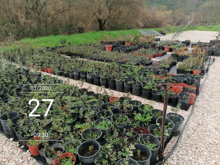 Sustainability Plant Nursery