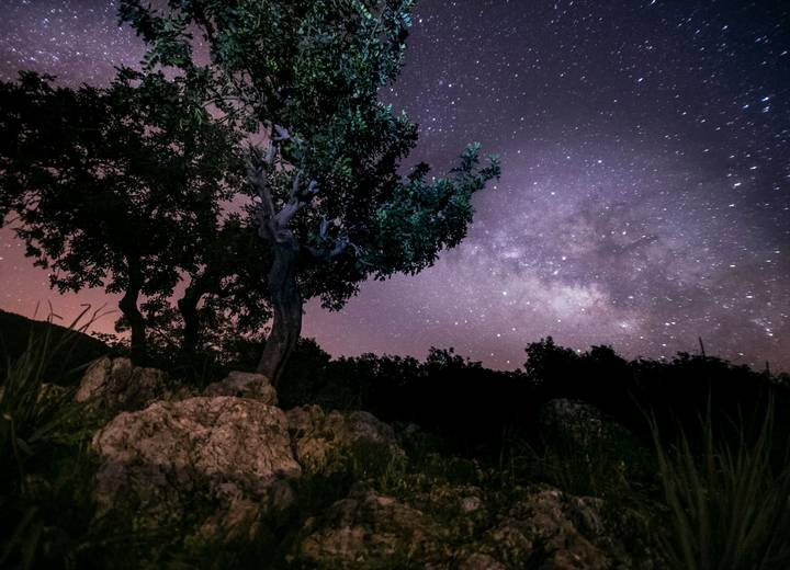 Trees and night sky full of stars at Ombria Resort