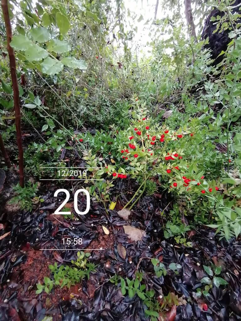 Sustainability Indigenous Plants
